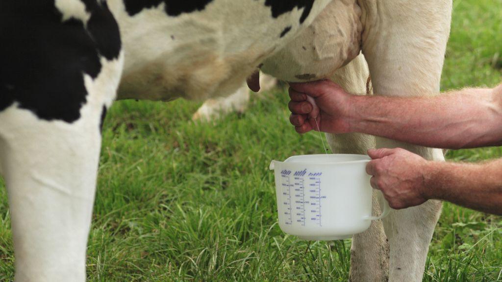 """Die KAB forscht: """"Woher kommt die Milch?"""""""